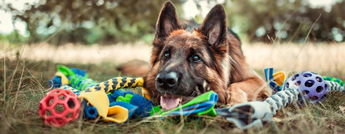 zabawki dla psa owczarek