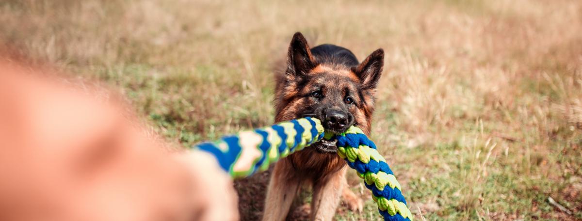 zabawki dla psa szarpak