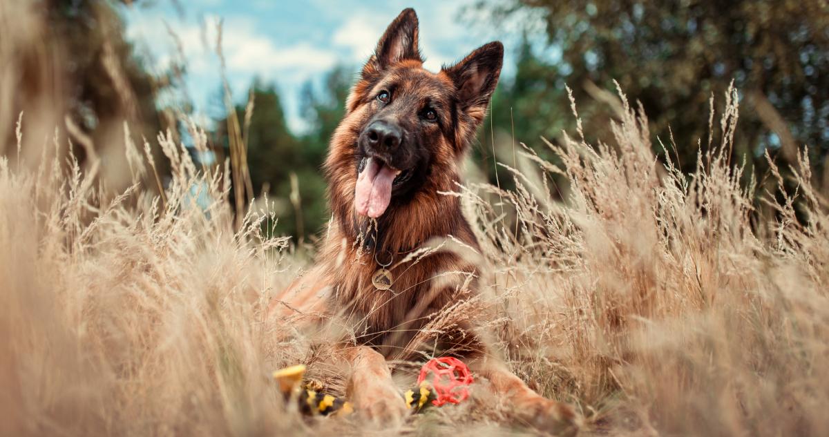 zabawka dla dużego psa zabawki